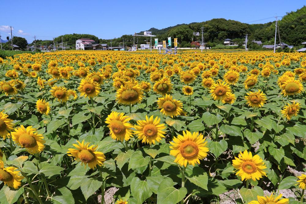 「香川観光」に関する、おすすめの観光・お出かけスポットや最新のイベント情報を紹介しています。人気の定番スポットから穴場情報までまとめましたので、楽しい週末や休日を過ごすための参考にしてくださいね。