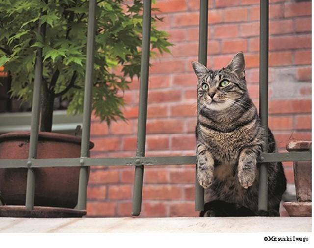 「猫」に関する、おすすめの観光・お出かけスポットや最新のイベント情報を紹介しています。人気の定番スポットから穴場情報までまとめましたので、楽しい週末や休日を過ごすための参考にしてくださいね。