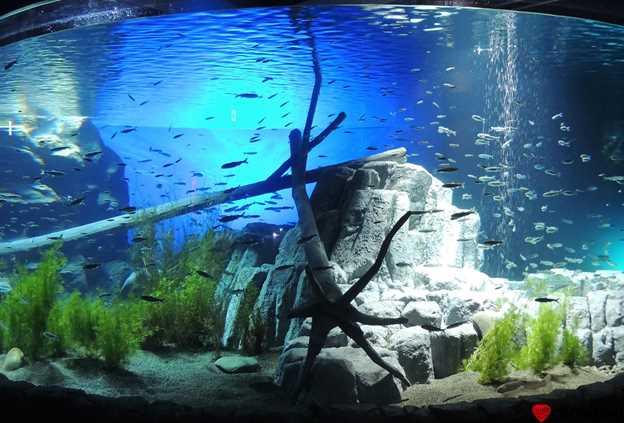 北海道 水族館7選!観光にぴったりな人気水族館まとめ
