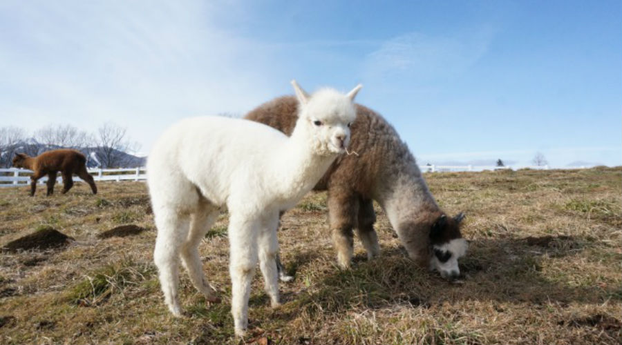 「牧場」に関する、おすすめの観光・お出かけスポットや最新のイベント情報を紹介しています。人気の定番スポットから穴場情報までまとめましたので、楽しい週末や休日を過ごすための参考にしてくださいね。