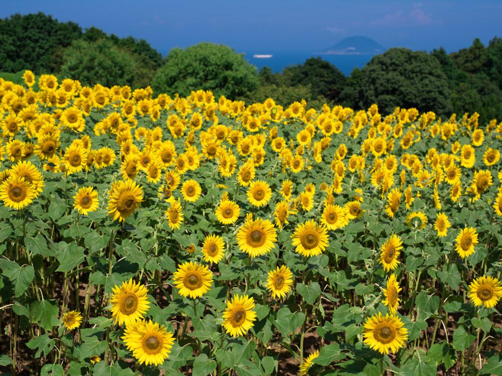 「福岡市」に関する、おすすめの観光・お出かけスポットや最新のイベント情報を紹介しています。人気の定番スポットから穴場情報までまとめましたので、楽しい週末や休日を過ごすための参考にしてくださいね。