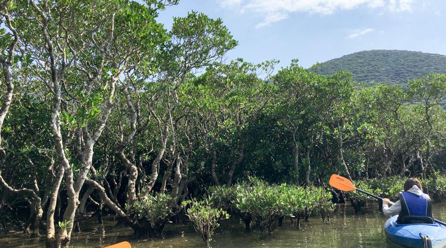 ジャングルに潜入!南国のマングローブ林をカヤックで探検してきた<前編>