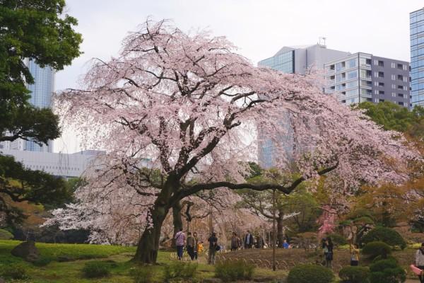 「文京」に関する、おすすめの観光・お出かけスポットや最新のイベント情報を紹介しています。人気の定番スポットから穴場情報までまとめましたので、楽しい週末や休日を過ごすための参考にしてくださいね。