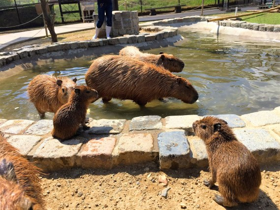 「動物園」に関する、おすすめの観光・お出かけスポットや最新のイベント情報を紹介しています。人気の定番スポットから穴場情報までまとめましたので、楽しい週末や休日を過ごすための参考にしてくださいね。