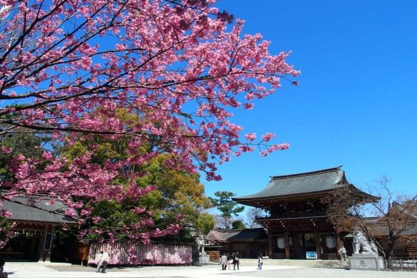 「寒川神社」に関する、おすすめの観光・お出かけスポットや最新のイベント情報を紹介しています。人気の定番スポットから穴場情報までまとめましたので、楽しい週末や休日を過ごすための参考にしてくださいね。