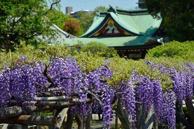 「江東」に関する、おすすめの観光・お出かけスポットや最新のイベント情報を紹介しています。人気の定番スポットから穴場情報までまとめましたので、楽しい週末や休日を過ごすための参考にしてくださいね。