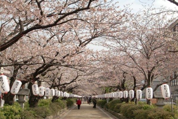 「鶴岡八幡宮」に関する、おすすめの観光・お出かけスポットや最新のイベント情報を紹介しています。人気の定番スポットから穴場情報までまとめましたので、楽しい週末や休日を過ごすための参考にしてくださいね。
