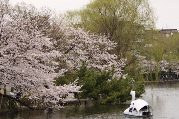 「石神井公園」に関する、おすすめの観光・お出かけスポットや最新のイベント情報を紹介しています。人気の定番スポットから穴場情報までまとめましたので、楽しい週末や休日を過ごすための参考にしてくださいね。