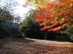 上野公園の紅葉写真