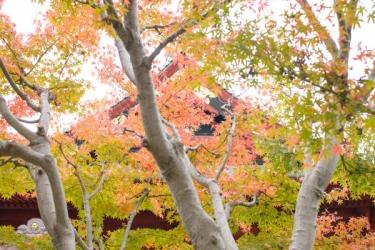 上野恩賜公園の紅葉写真