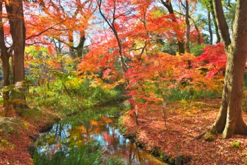 下鴨神社の紅葉写真