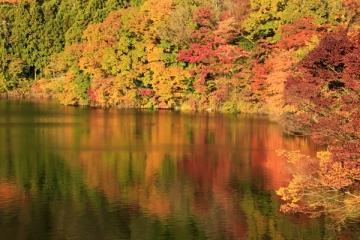 丹沢湖の紅葉写真
