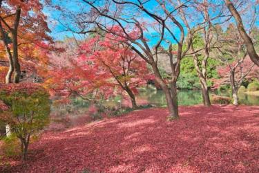 京都府立植物園の紅葉写真