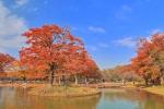 代々木公園の紅葉写真