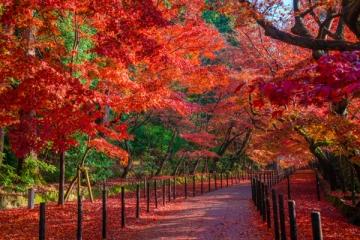 光明寺の紅葉写真