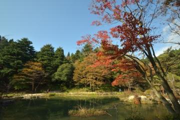六甲高山植物園の紅葉写真