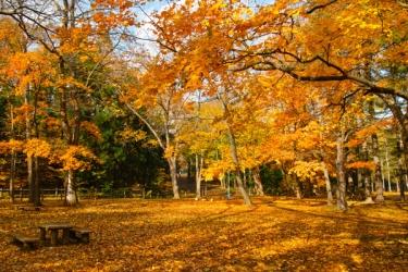 円山公園の紅葉写真