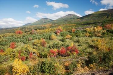 十勝岳の紅葉写真