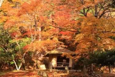 吉野山の紅葉写真