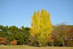 名城公園の紅葉写真
