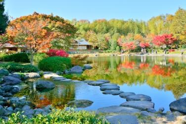 昭和記念公園の紅葉写真