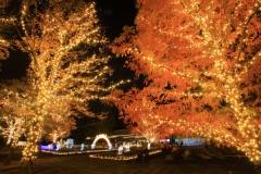 国営武蔵丘陵森林公園の紅葉写真