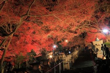大山寺の紅葉写真