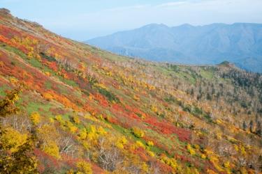 大雪山(銀泉台)の紅葉写真