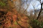 天狗高原の紅葉写真