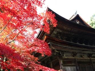 定光寺の紅葉写真