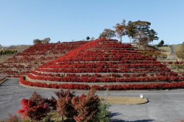 宮ヶ瀬ダムの紅葉写真
