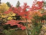 宮島の紅葉写真