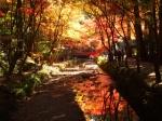 小國神社の紅葉写真