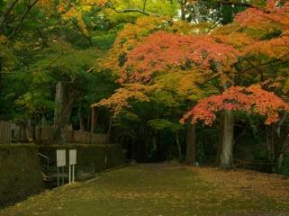 小松寺の紅葉写真