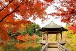成田山公園の紅葉写真