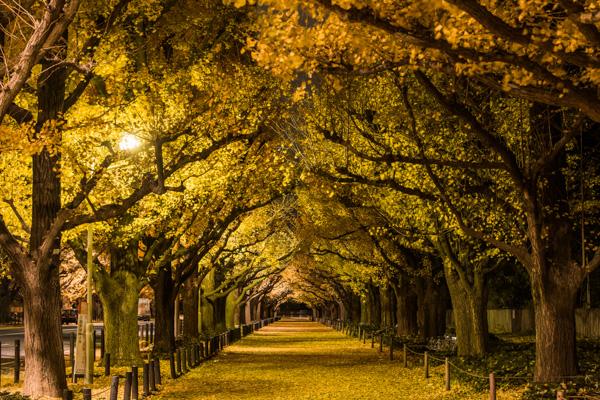 明治神宮外苑の写真