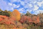 本土寺の紅葉写真