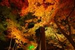 松島の紅葉写真