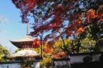 根来寺の紅葉写真