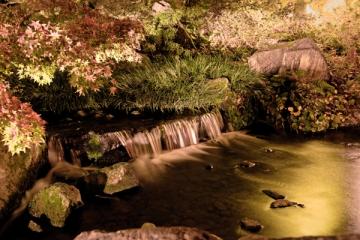 梅小路公園の紅葉写真