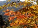 氷ノ山の紅葉写真