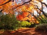 清水公園の紅葉写真