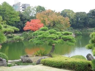 清澄庭園の紅葉写真