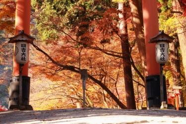 日吉大社の紅葉写真