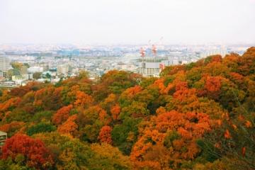 生田緑地の紅葉写真