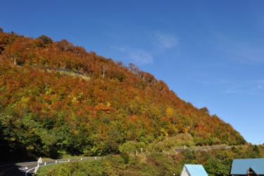 白山スーパー林道の紅葉写真