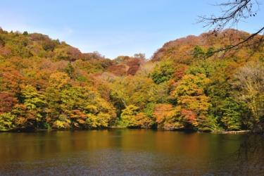 白神山地の紅葉写真
