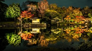 白鳥庭園の紅葉写真