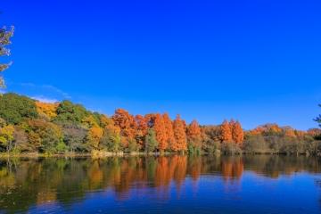 石神井公園の紅葉写真