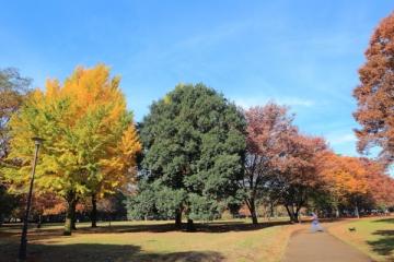 砧公園の紅葉写真